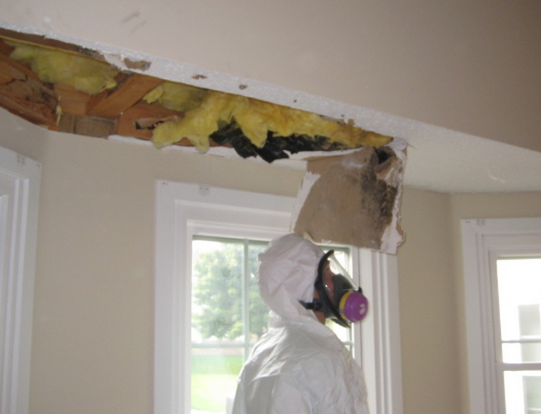 Mold Remediation Clinton Township MI