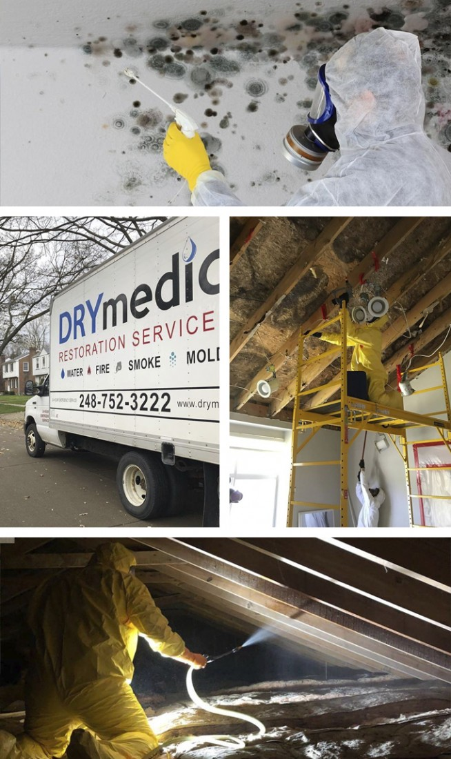 Attic Mold Removal Company Michigan: IICRC Certified | DRYMedic - mold-removal